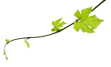 The Vines at Bushmere Estate | perfect venue for your ...
